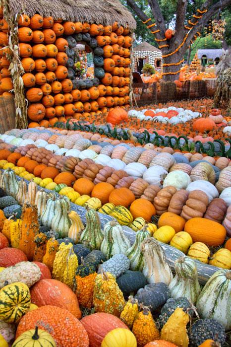 2012 autumn at the arboretum north texas e news - Botanic gardens pumpkin festival ...