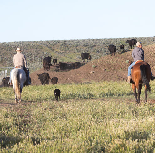 Black Ink Ranching From The History Books North Texas E News