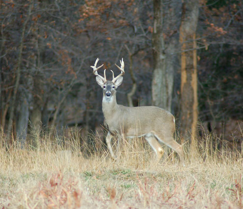 Time to begin prepping for bow season - North Texas e-News